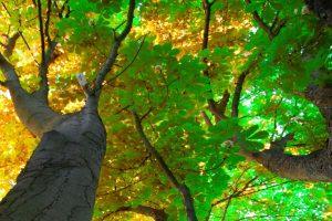 Love Affair with Tree